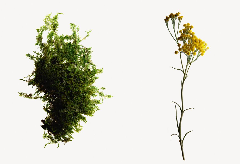 100%自然由来の成分から作られた シリーズ共通成分「ビューティー・モス・コンプレックス®